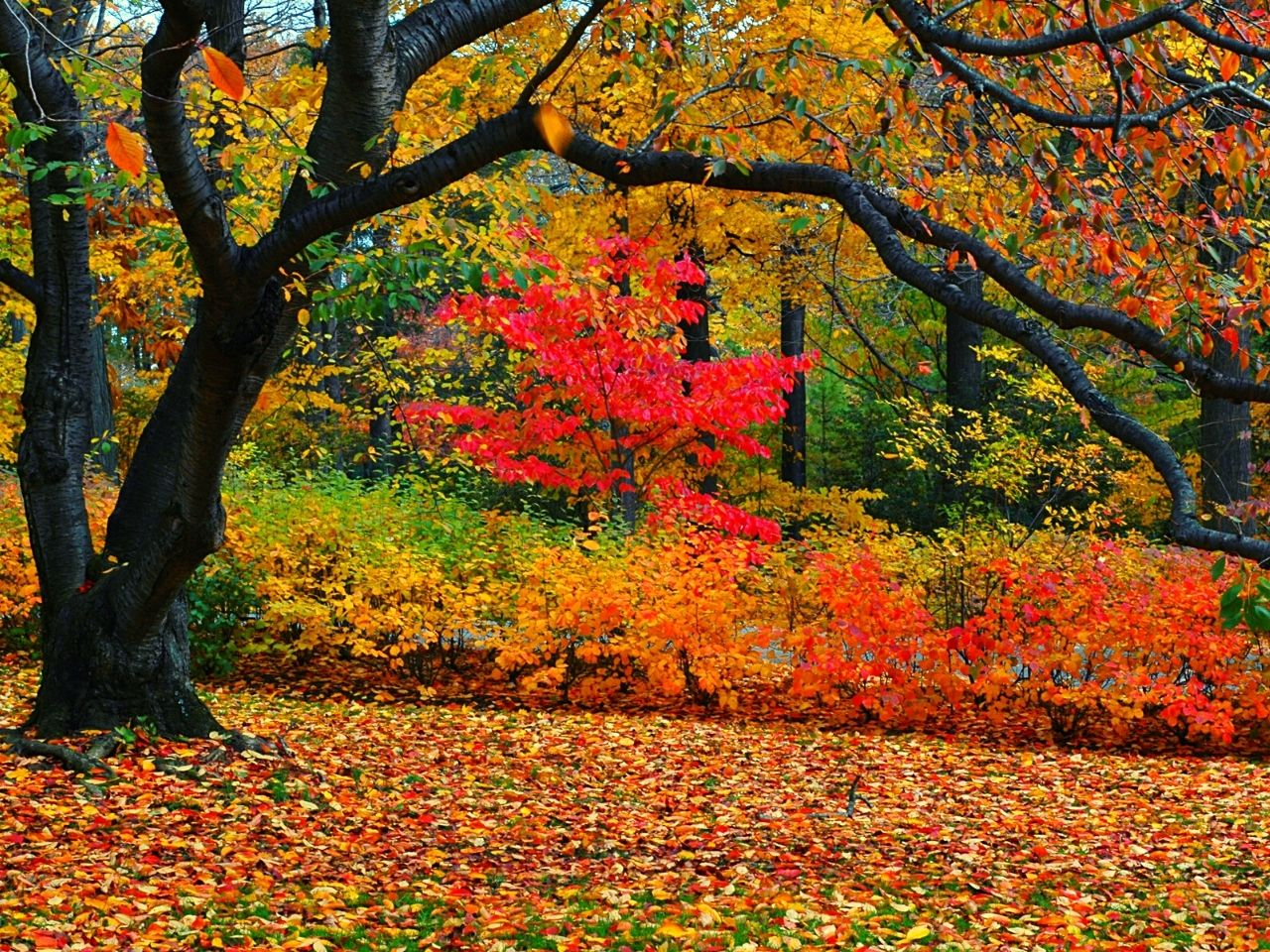 Spectacular Fall Foliage Destinations Around The World
